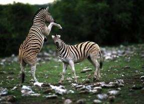 Safari-Paparazzi: Wildlife pur